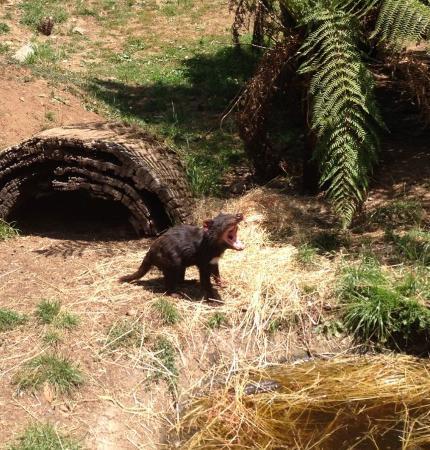 Gunns Plains, أستراليا: An iconic devil pose!