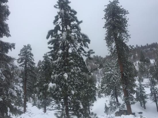 Snow Summit: Big Bear