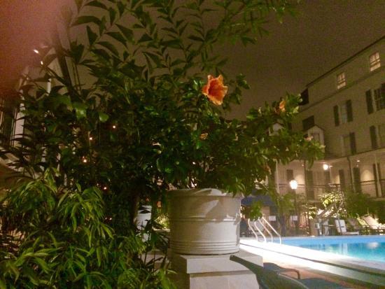 lush flowers abloom in december by salt water pool picture of rh tripadvisor ie