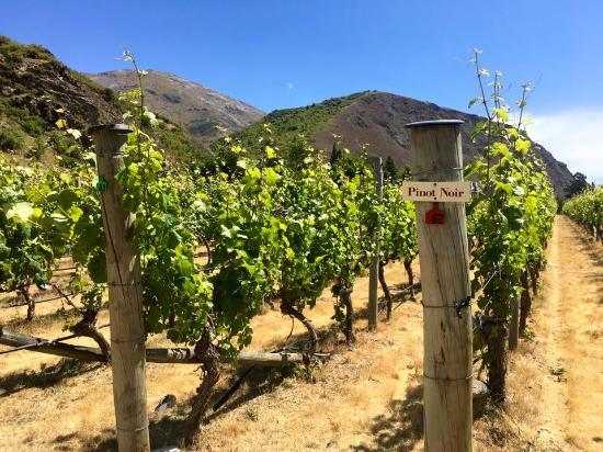 Queenstown, New Zealand: Gibbston Valley Wines