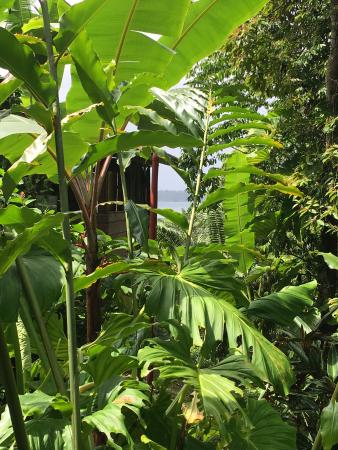 La Loma Jungle Lodge and Chocolate Farm: Tree top cabin with ocean view
