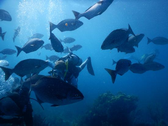 Blue Heaven Dives with Michael Cain: Our 11-year-old enjoying the wildlife