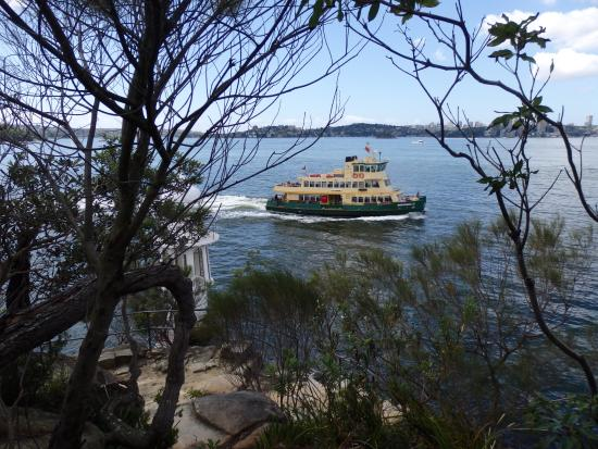 Cremorne Point to Mosman Bay Walk: Ferry returning from Mossman Wharf, viewed from Cremorne Reserve
