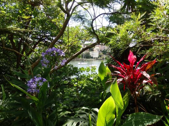 Cremorne Point to Mosman Bay Walk: View of Mossman Bay from within Lex and Ruby's garden