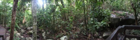 Fitzroy Island Resort: Secret Garden Walk