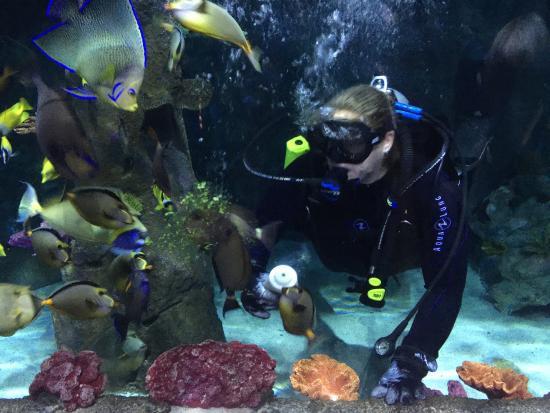 Jungle Trail Picture Of Loveland Living Planet Aquarium