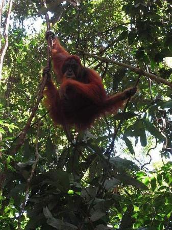 Primata Paradise Adventure