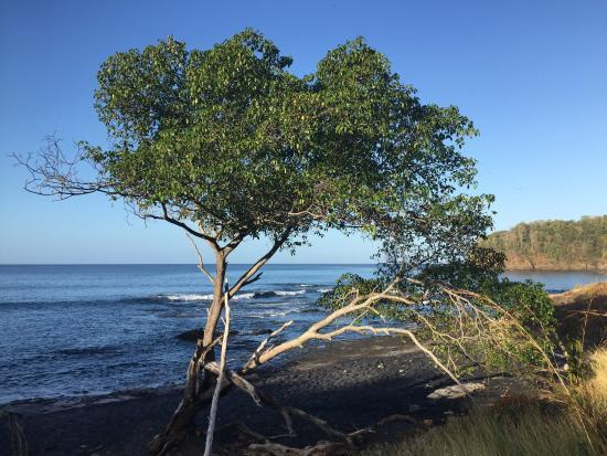 Playa Grande, كوستاريكا: photo7.jpg