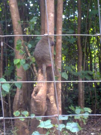 """Nature Sanctuary : Baboon showing skills in """"tree climbing"""""""