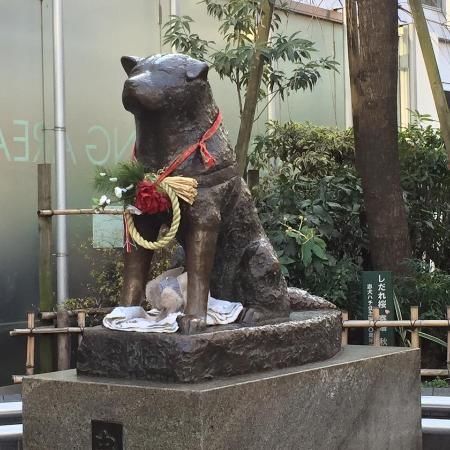 How To Review Book You Havent Read >> Hachi the dog - Picture of Hachiko, Shibuya - TripAdvisor
