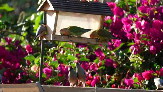 Eva Villa: bunte Vögel auf der Terrasse