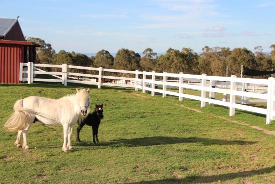 Cherrabah Homestead Resort: 5 day old pony