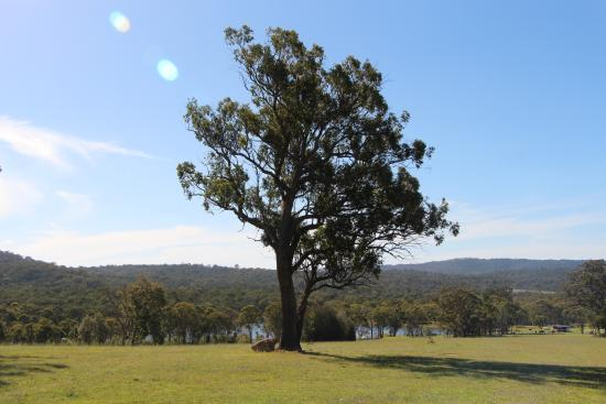 Elbow Valley, Australien: Lake view