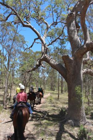 Elbow Valley, Australien: Horseback riding