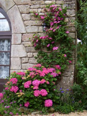 Morbihan, Frankrike: gorgeous flowers everywhere