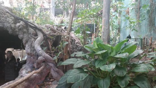 CosmoCaixa Barcelona : Amazon forest
