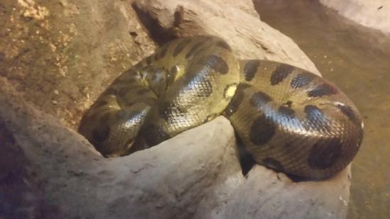 CosmoCaixa Barcelona : anaconda