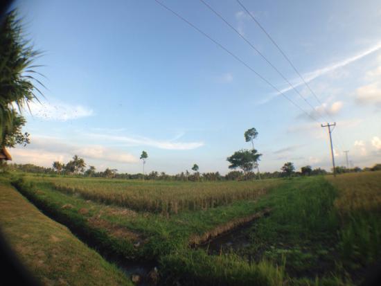 Hidden Gem in Ubud