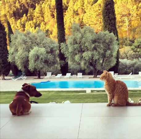 Cascade Manor: Terrasse mit Blick auf den Pool