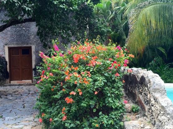Tixkokob, México: lush landscaping