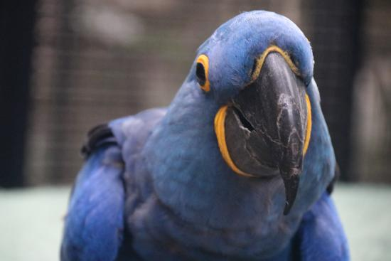 Nancy Forrester's Secret Garden: Up close to this handsome hyacinth macaw