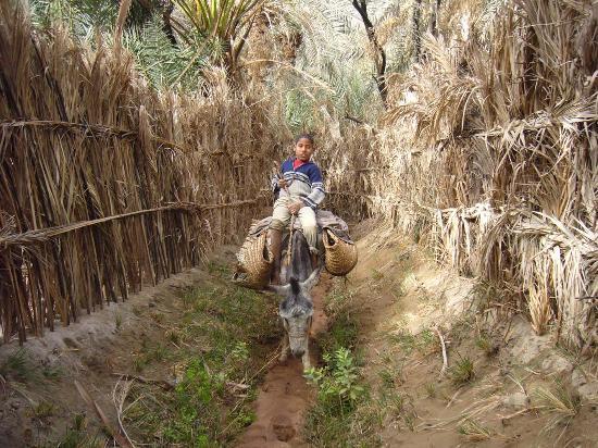 Bawiti, Egypt: Weg zwischen den Palmgärten