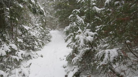 Lion's Head, Canada : winter on the Bruce Trail