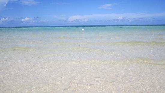 beach at pullman resort next door picture of melia cayo coco rh tripadvisor co za
