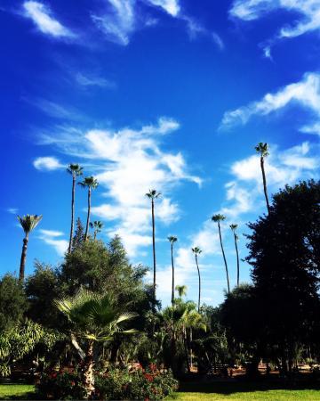 Jardin el Harti: photo0.jpg