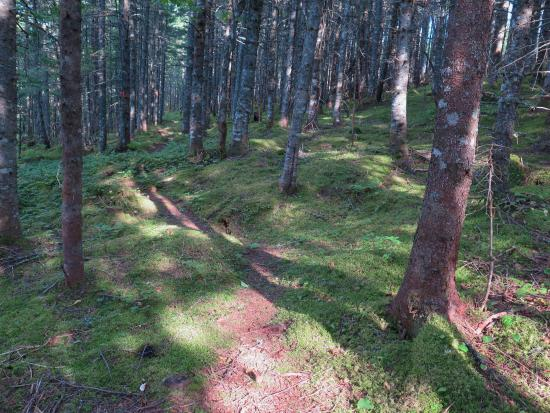 Baddeck, Canadá: A walk in the woods