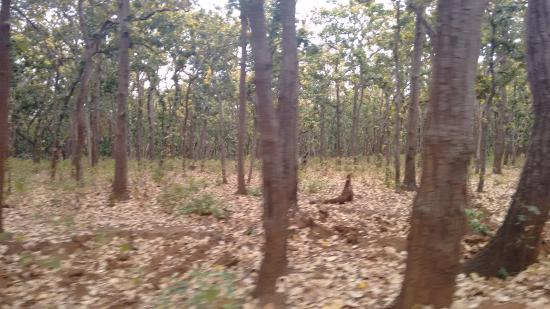 Hotel Prabhat Vihar: Jungles of Netarhat