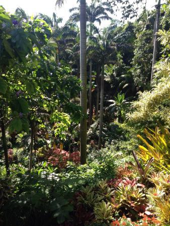 Hunte's Gardens: photo1.jpg