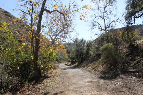 写真Solstice Canyon枚