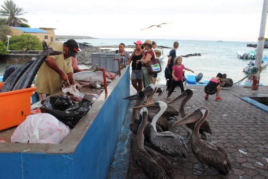 Hora de comer picture of santa cruz fish market puerto for Santa cruz fishing