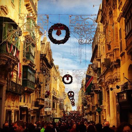 My Maltese Guide: photo1.jpg