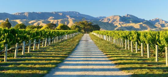 Marlborough Region, Νέα Ζηλανδία: Marlborough wine region