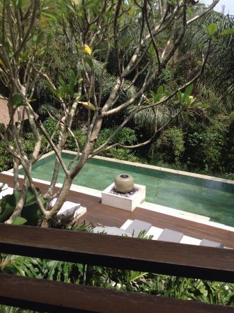 The Purist Villas and Spa: Vue d'une des piscines commune depuis la terrasse de la villa