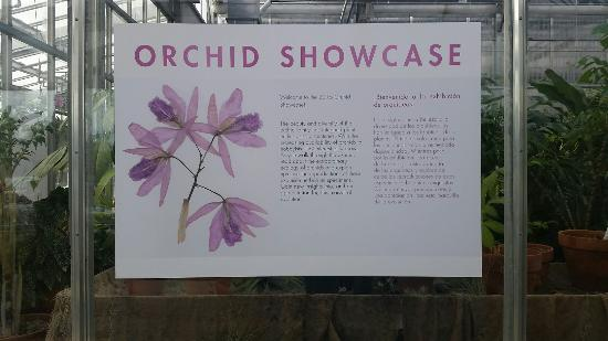 Denver Botanic Gardens: Beautiful orchid display