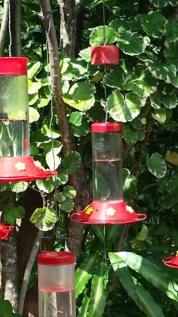 Maracas Bay, Trinidad: Feeders in the garden
