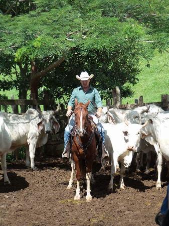 Miramar, Costa Rica: Ein Abenteuer der besonderen Art ,die Arbeit am Rind