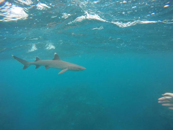 Waya Lailai, Fiji: photo8.jpg
