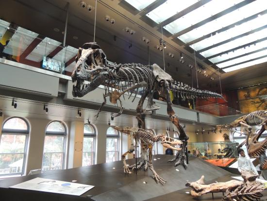 t rex picture of natural history museum of los angeles county los rh tripadvisor ie