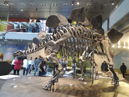 stegosaurus picture of natural history museum of los angeles rh tripadvisor co za
