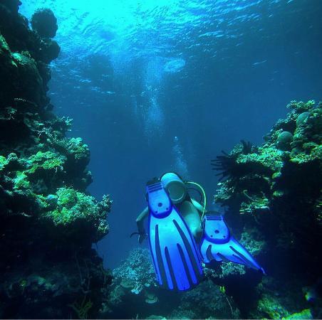 Uepi Island Resort: Londora Gardens Dive