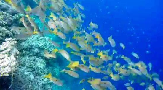 Uepi, Islas Salomón: Thousands of fish at the welcome jetty
