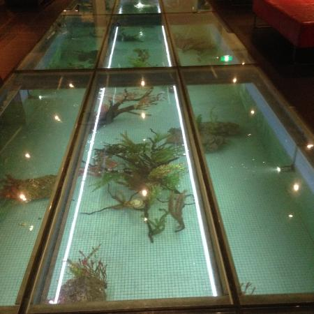 Bed picture of rydges sydney central sydney tripadvisor for Floor fish tank