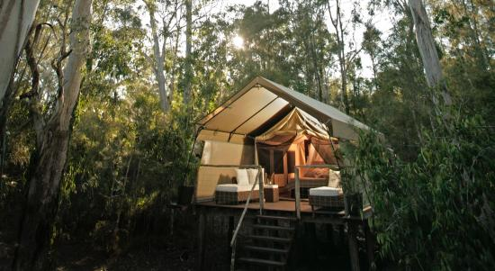 Paperbark Camp: Deluxe Safari tent at sunrise