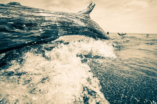 Point Pelee National Park: Waves on Log