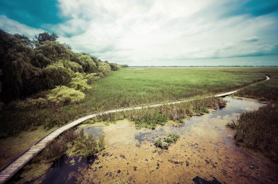 Point Pelee National Park: Path in the Marsh