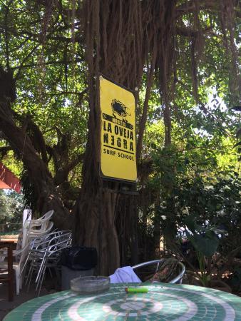 La Oveja Negra Hostel and Surf Camp: photo0.jpg